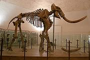 Photo of Mammut
