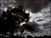 Photo of tree and clouds